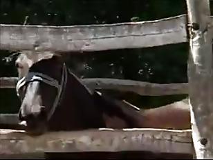 Picture In The Farm In Romania